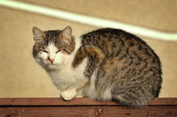 motley domestic cat standing on wooden fence