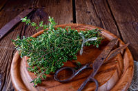 fresh and Aromatische Thymus