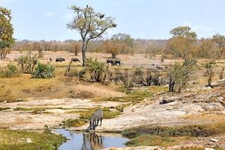 Tiervielfalt und Landschaft im Kruger Nationalpark, Südafrika, animals and landscape of Kruger National Park, South Africa