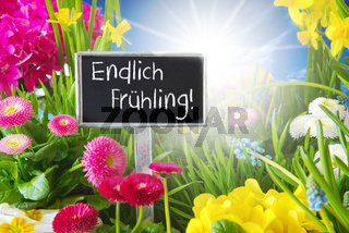 Sunny Spring Flower Meadow, Endlich Fruehling Means Hello Spring