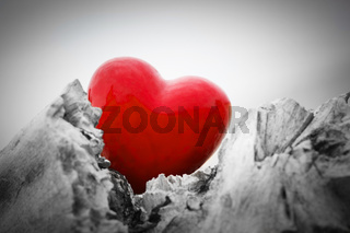 Red heart in a tree trunk and branches. Love symbol. Red against black and white