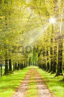 Baumalle mit Sonnenstrahlen