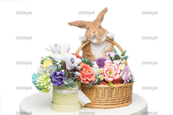 Beautiful domestic rabbit