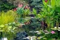 Water Garden Mirror