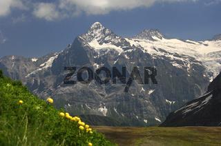 Wetterhorn-Massiv, Grindelwald, Schweiz
