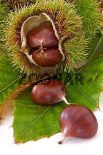 Esskastanien - castanea sativa - chestnuts