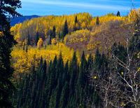 Colorado Mountainside