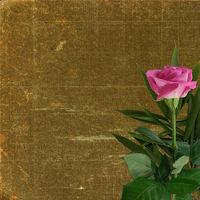Grunge background for design with pink rose