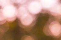 Color nature bokeh background blurred. Abstract defocused natural bokeh