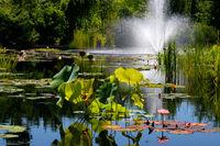 Thriving Water Garden