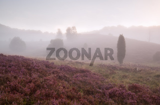 hills with heather in morning fog