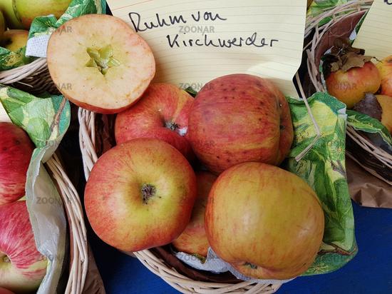 Ruhm von Kirchwerder, Apfel, Malus, domestica, Alte Apfelsorte