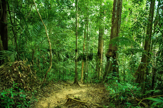 Tropical rainforest landscape with path