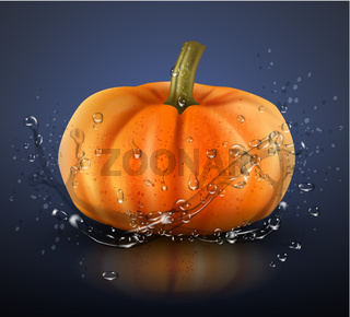 Pumpkin isolated on blue with splashes of water. Realistic vector illustration.