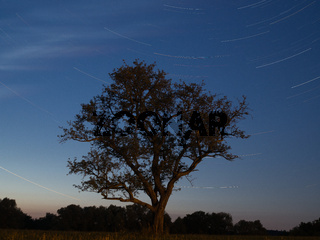 Star trail mit Baum