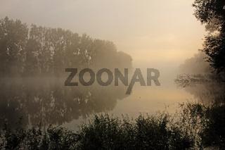 Morgenstimmung am Altrhein