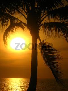 Palmen im Licht