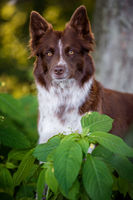 BENZ KERSTIN - BORDER COLLIE-7.jpg