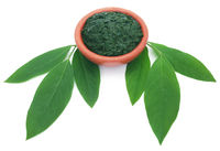 Medicinal pigeon pea leaves with ground paste