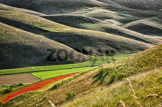 The hills of Castelluccio