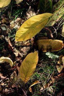 Herbstwiese, Blätter ganz nah