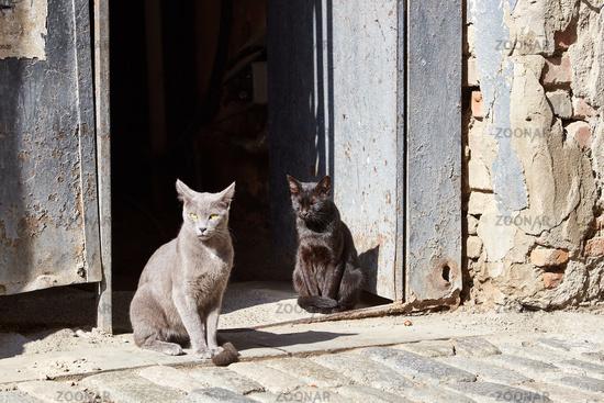 zwei Katzen in Tiflis, Georgien
