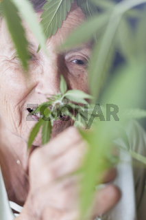 Happy senior woman smelling Cannabis plant