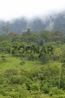 Urwald, Khao Yai, Nationalpark, Thailand