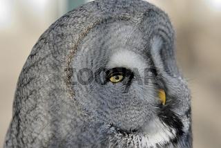 eule 2 - owl 2