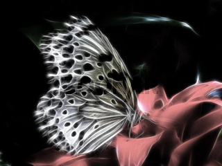 Weiße Baumnymphe Schmetterling