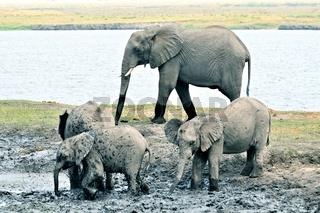 die kleinen Elefanten im Schlammloch