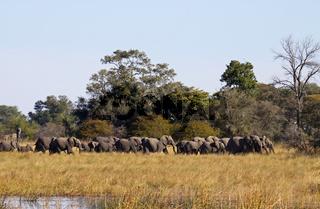Elefantenherde im Susuwe Nationalpark, Namibia