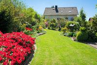 Rasen, Azaleen, Haus, Garten