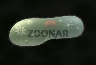 model biological micro organism paramecium caudatum 3d illustration