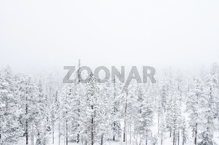 A foggy snow covered forest in Finnish Lapland. Poor visibility.
