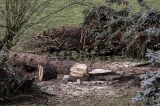 Aufräumarbeiten nach dem Sturmtief 'Friederike' in Mitteldeutschland