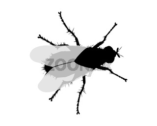 Silhouette einer Fliege - Silhouette of a fly on white background