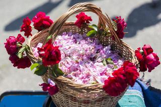 Pink rose blossom in basket