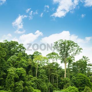 Tropical rainforest landscape with blue sky