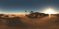 panorama of palms in desert at sunset. made with the one 360 degree lense camera without any seams. ready for virtual reality