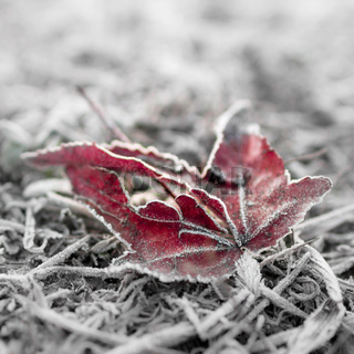 Frozen red leaf and bokeh