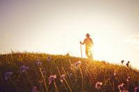 Summer meadow backlight hiker