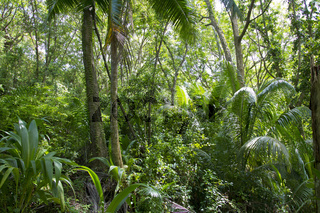 Urwald auf den Seychellen, Jungle on the Seychelles