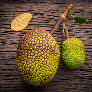 Sweet Jack fruit on shabby wooden background .Tropical fruit  sweet and aromatic flesh of a ripe jack fruit ('Artocarpus heterophyllus') tempts buyers at a tropical fruit stall in Koh Samui ,Thailand.