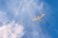 Eine fliegende Möwe vor einem Sonnenhimmel