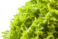 Fresh lettuce salad. Green background