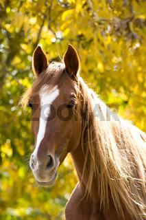 horse on yellow