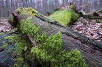 Moss covered II