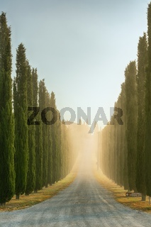 A very famous Tuscan cypress alley