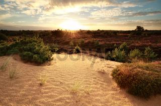 gold sunrise over sand dune